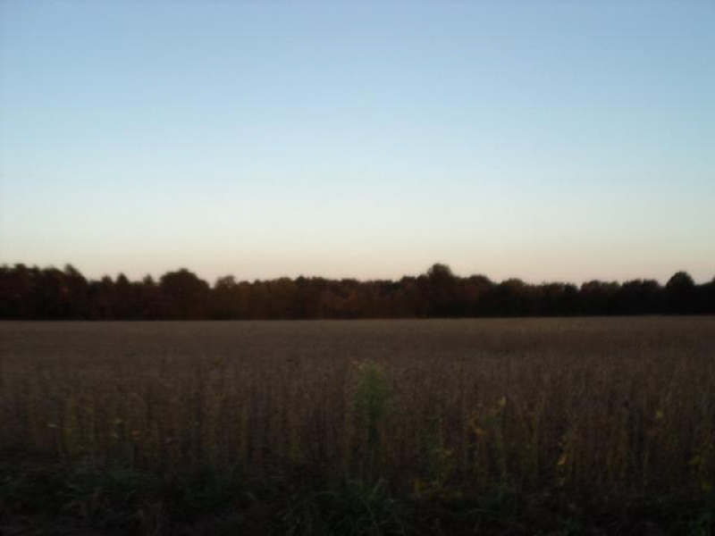 Bardwell West Road, Green Twp, OH 45154, ,Land,For Sale,Bardwell West,1457116