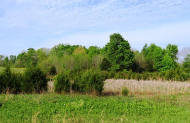 St Rt 73, Jackson Twp, OH 45133, ,Land,For Sale,St Rt 73,1612200